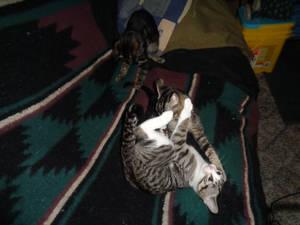 Kitten Couch Rumble