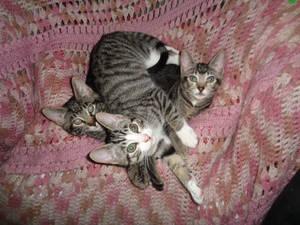 Kitten pile on the Granny chair!