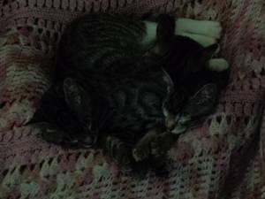 Sleepy kitten pile