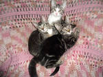 Final kitten pile on the Granny chair