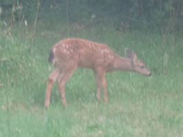 Da baby deer