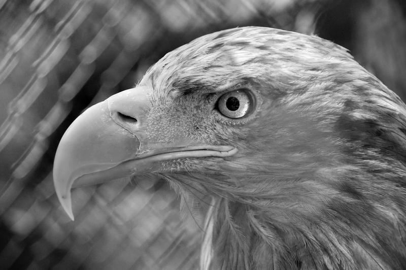 Eagle I by DreamIsMyReality
