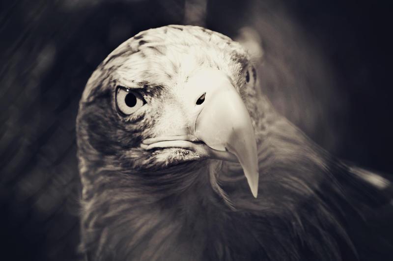 Eagle II by DreamIsMyReality