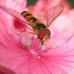 In the pink by AnnaKirsten
