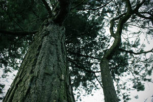 Tree Wide/low Angle by todaywiththeCJB