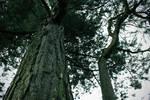 Tree Wide/low Angle