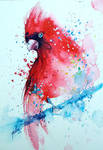 Cardinal. watercolor painting