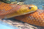 Vibrant Snake