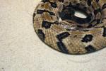 Artsy Snake
