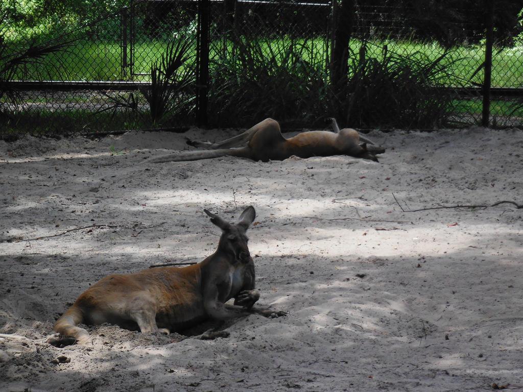 Just Laying Around by MissLucysLeeches