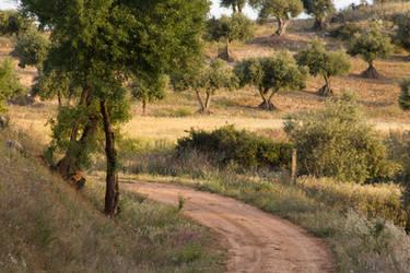 Travesia entre olivos