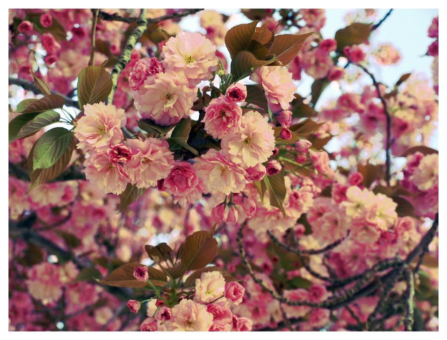 Pink tree II by eperlekvar