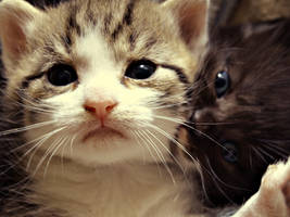 Cute face by eperlekvar
