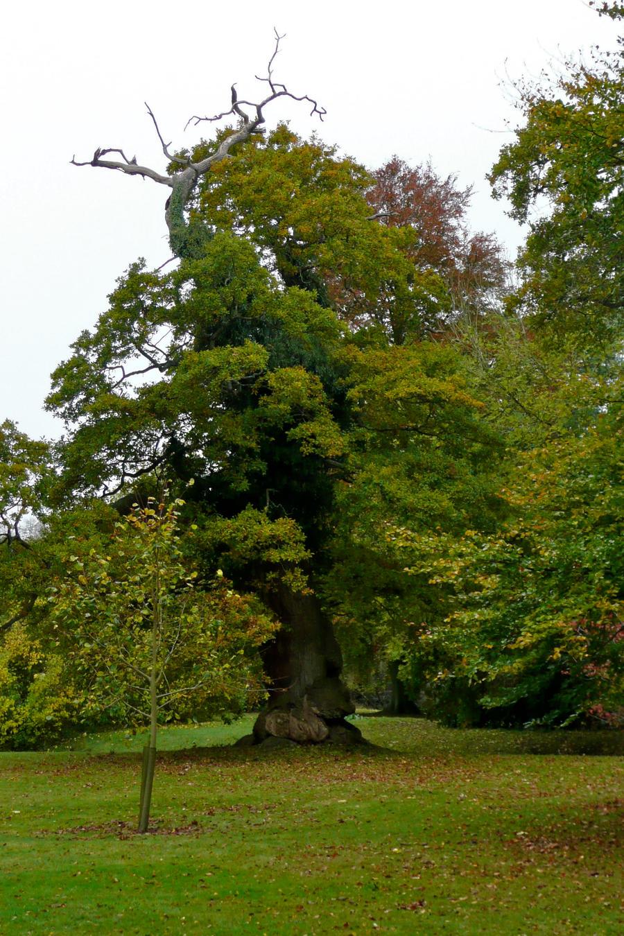 Talking Tree by lami