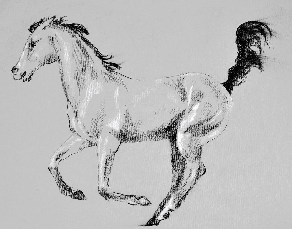 Running Horse by Animacat on DeviantArt