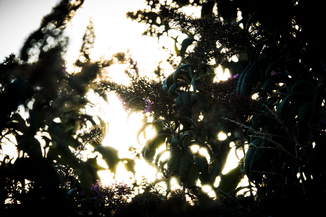 Falling Sun by Shastro