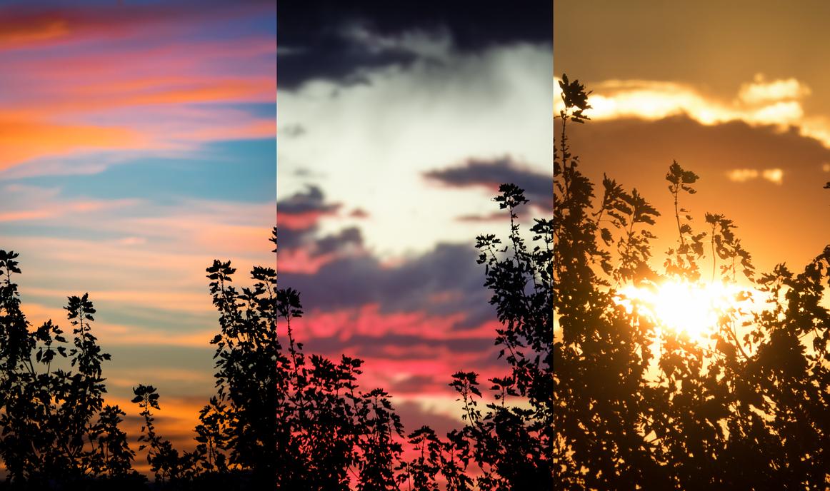 Sunset Panel Tree Focus by Shastro