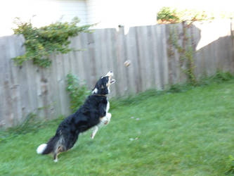 Tux Jumping After a Ball by awcook333