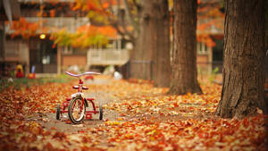 My First Real Fall by geolio