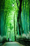 Tranquility in a Bamboo Forest