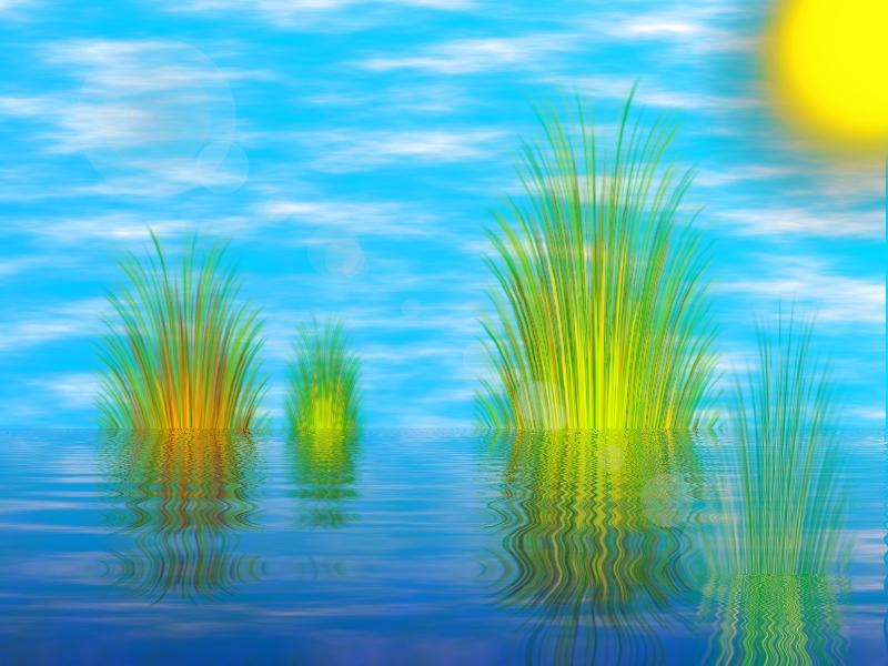 Water_Reeds_by_LJXD.jpg
