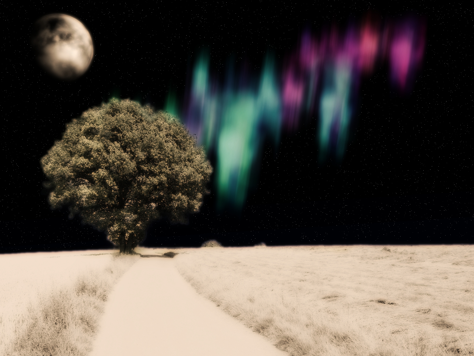 Arctic Tree - Photomanip Entry