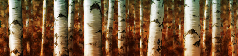 Birch trees by Shorra