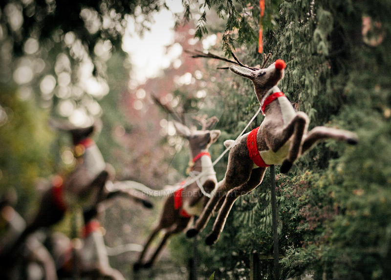 All the Reindeer