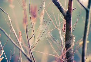 Twigs and Things