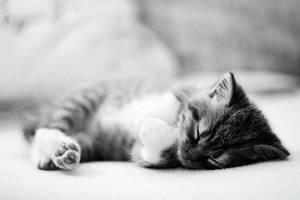 sweet dreams by antonina-w-ogrodzie