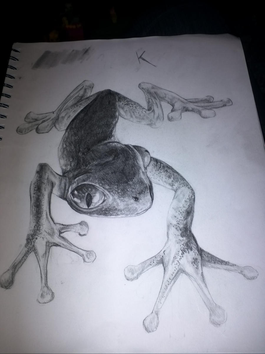 Realistic Tree Frog Drawings red eyed tree f...