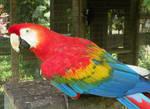 Macawcaw