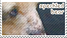 Speckled Bear Stamp by sunbirds