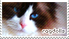 Ragdoll Cat Stamp by sunbirds