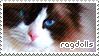 Ragdoll Cat Stamp by sunbirds