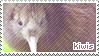 Kiwi Bird Stamp by sunbirds
