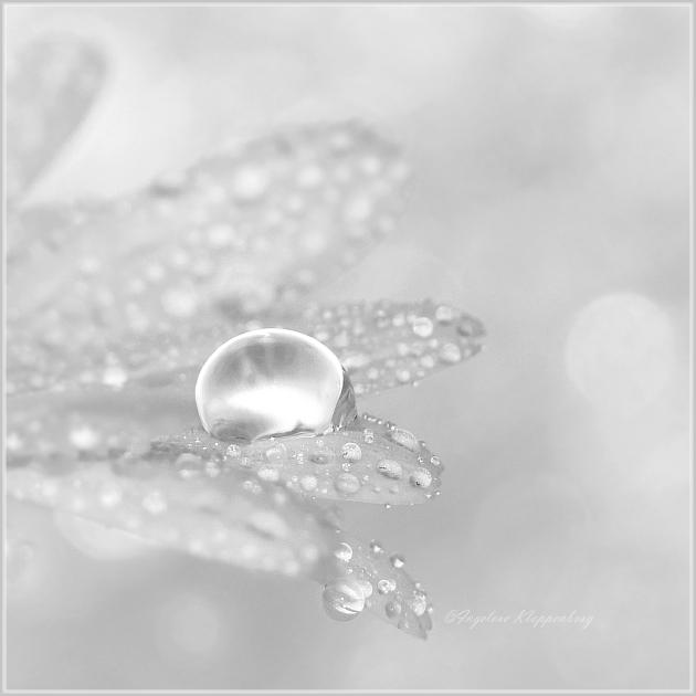 teardrop by Ingelore