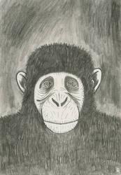Ape by mekkasop