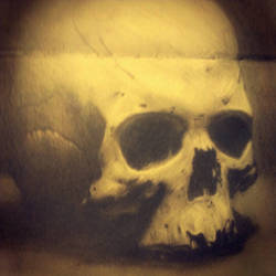 skull study by freezu