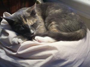Cat_Stock: 'Kirara'