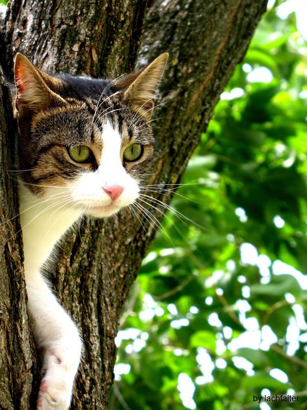 http://fc08.deviantart.net/fs43/i/2009/067/8/7/Cat_by_lachfalter.jpg