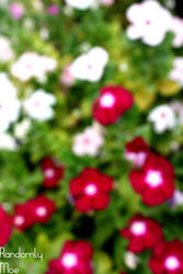 Out of focus flowers