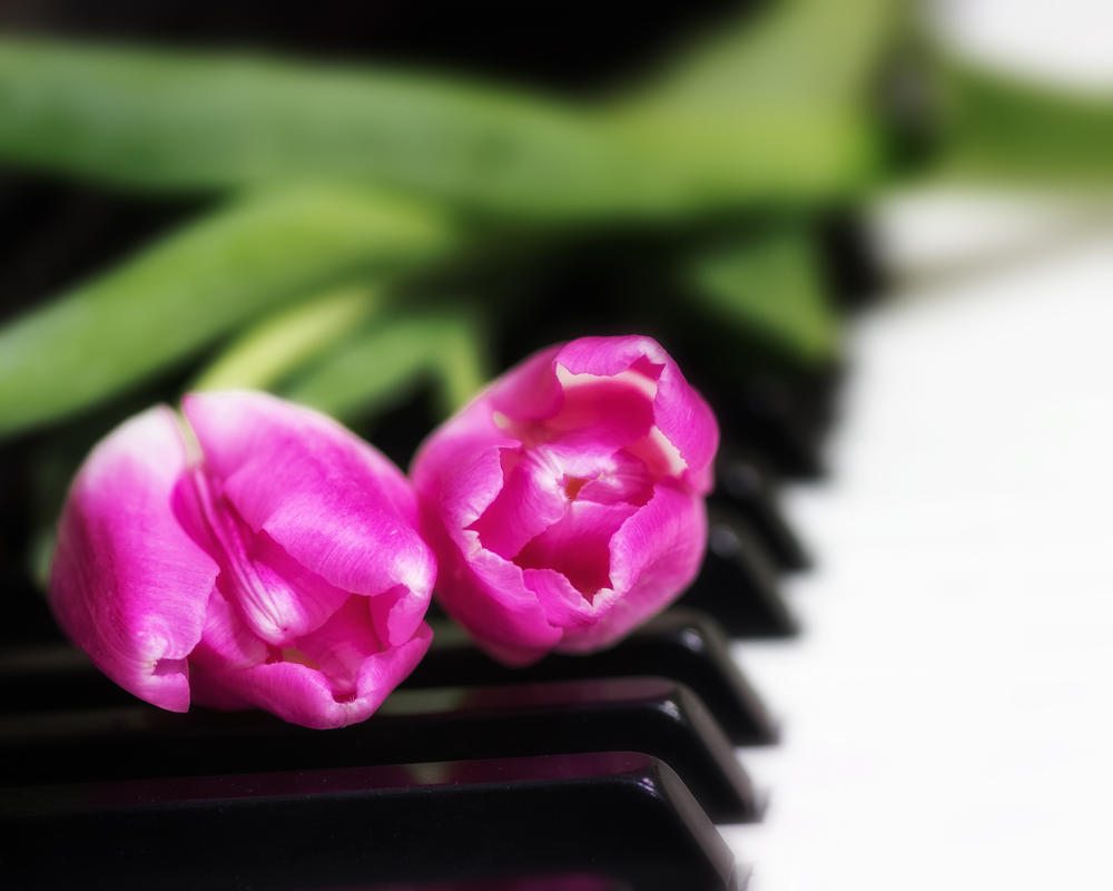 Tulips on My Piano by DeTea