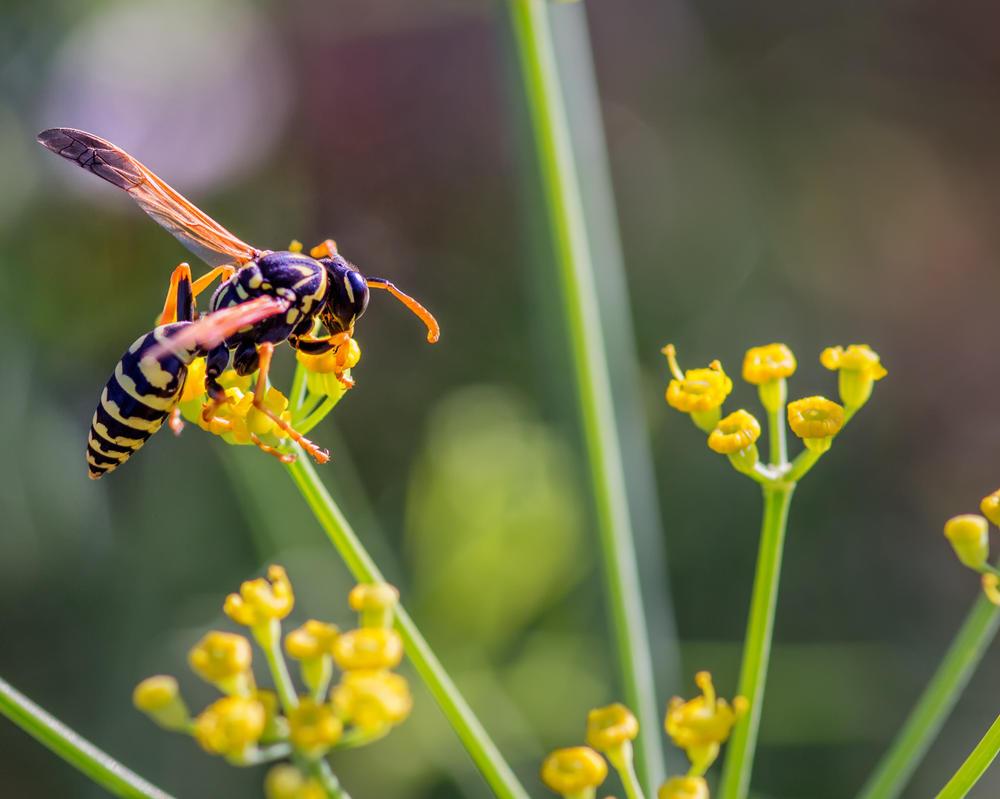 BeeBee by DeTea