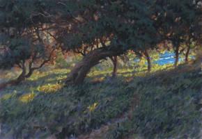 Banksia Grove by postapocalypsia