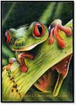 Frogface ATC