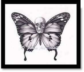 Lepidoptera by pbird12