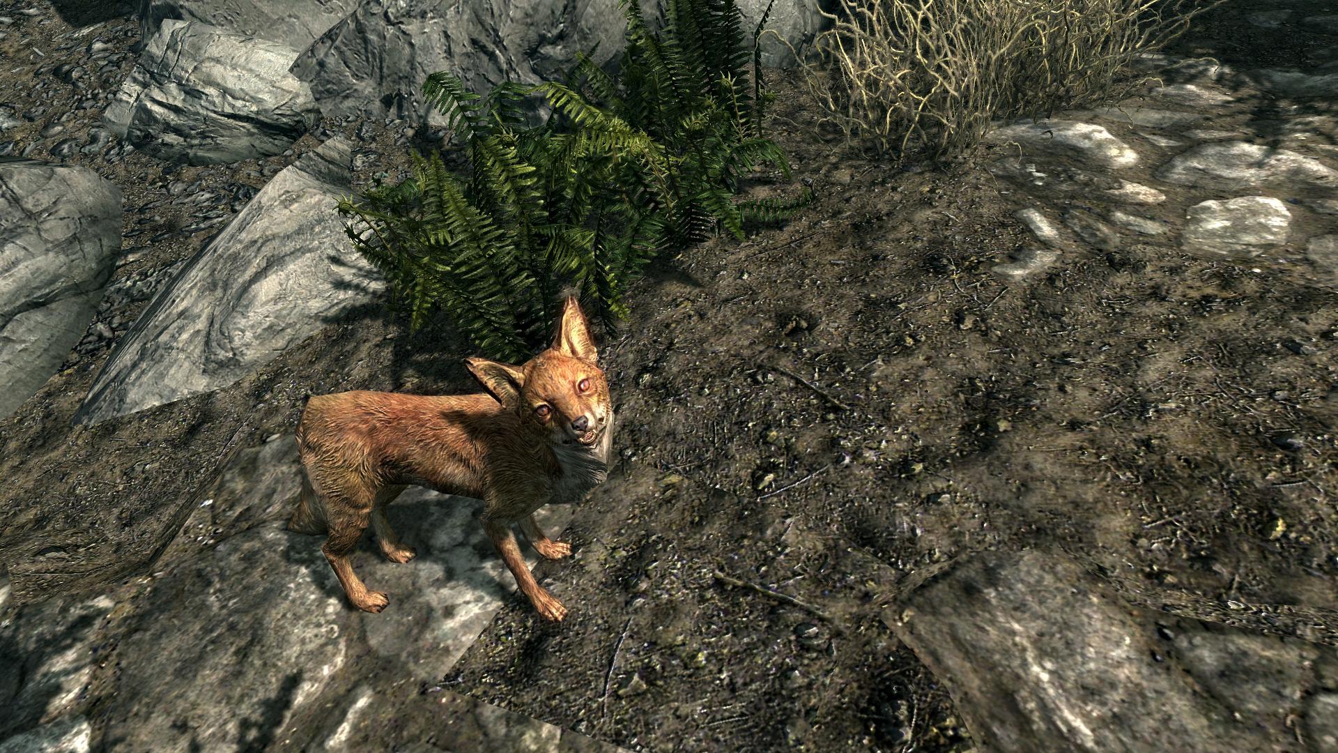 Le Happy Fox Skyrim