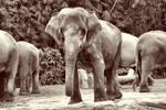 Elephant by dabdob