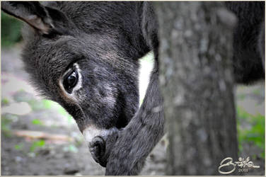 Donkey Foal 1 by brijome